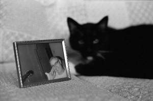 pop, cat, 35mm photograph