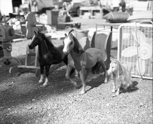 ponies at mart, 120mm photography